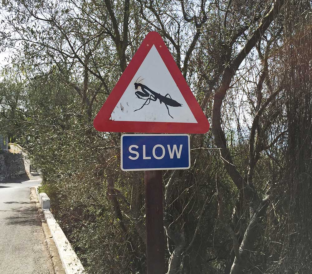 Just like in the UK, Gibraltar is enthusiastically adorned with street signs. Who knows what this one is warning us to slow down for on the walk down the rock, but it made me laugh!