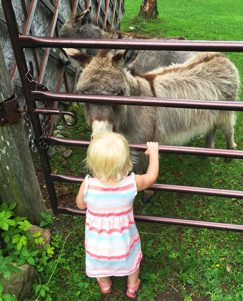 Rosie up close and personal with a miniature donkey at Sweetwater Lane Farm.