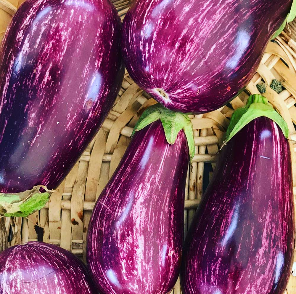 The most clorful eggplants I've ever seen.