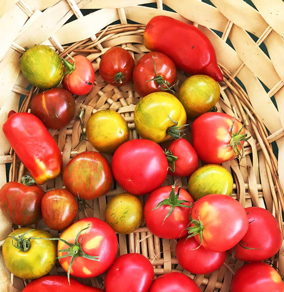 Organic, heirloom tomatoes.