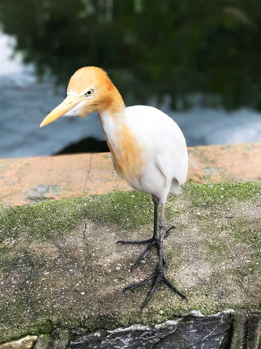Funny Little Bird.jpg