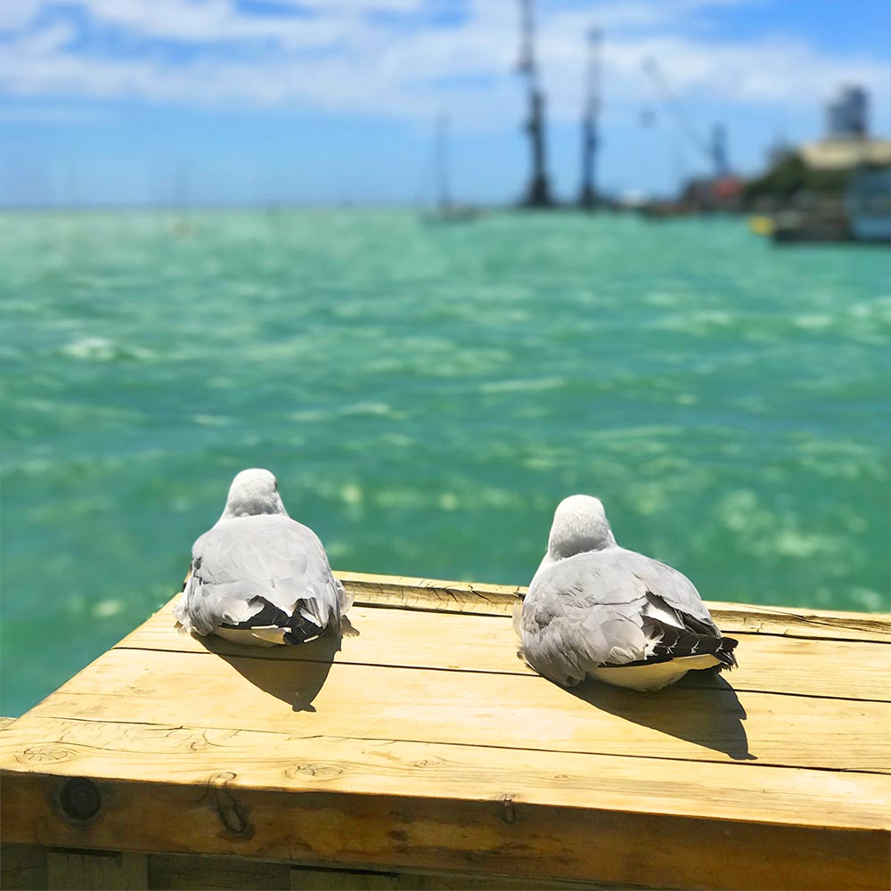 These two seagulls sat side by side on the terrace at the Boat Shed Cafe enjoying the view, for the entire duration of our lunch. They were here when we arrived and when we left :-)