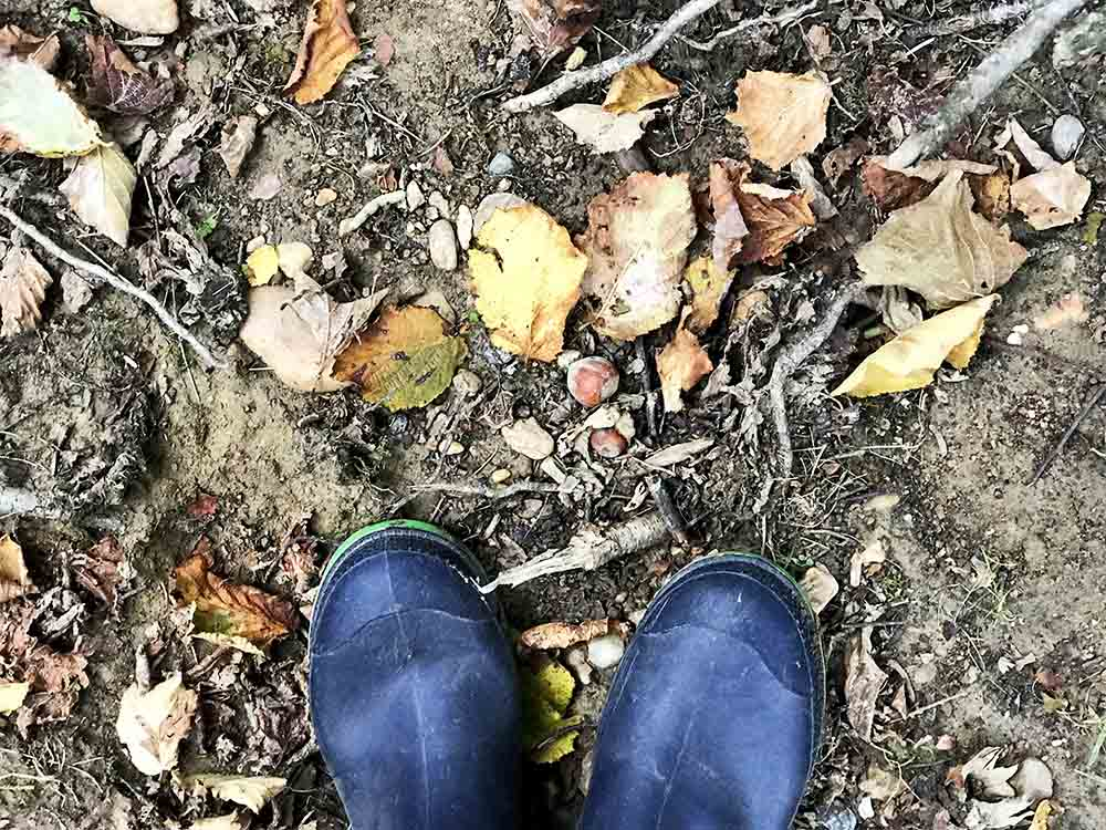 Here you can see some of the fallen hazelnuts on the ground, in front of my boots.