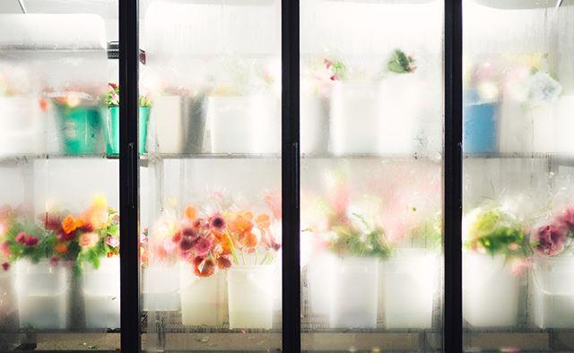 Frosty . . . . . #moody_captures #omd #igrefined #alifealive #alphacollective #wekeepmoments #wondermore #microfourthirds #em10 #vibesofvisuals #stilllife #onthetable #tabletop #postitfortheaesthetic #artifactuprising #flashesofdelight #morninglikethese #livethelittlethings #stilllifephotography #artdirection #floweroftheday #bouquet #flowerlovers #floweroflife #flowergram #flowerarrangement #subjectlight #chasinglight #makemoments #visualmemories