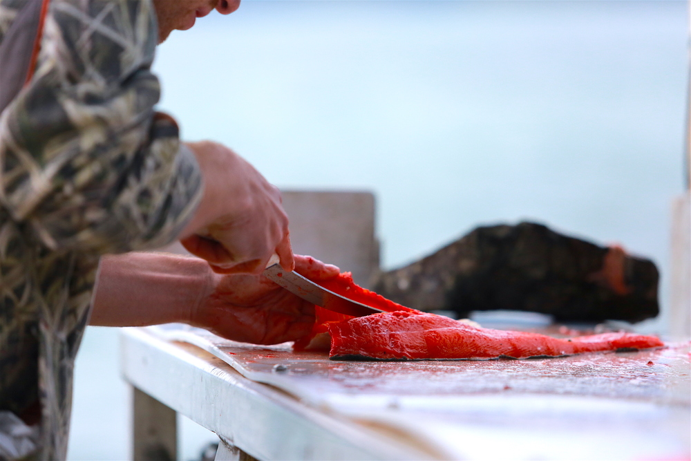 Salmon cleaning at a station along the Orca Inlet