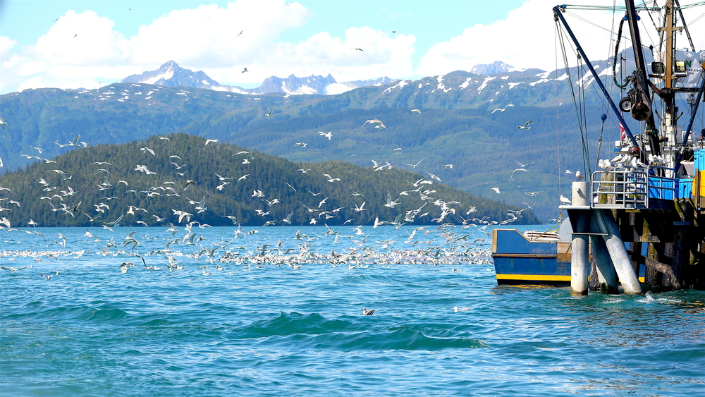 A large flock of seagulls blocked the way of the boat passing through. The birds then decided to all fly up at once- causing the Science and Memory crew members to duck and cover