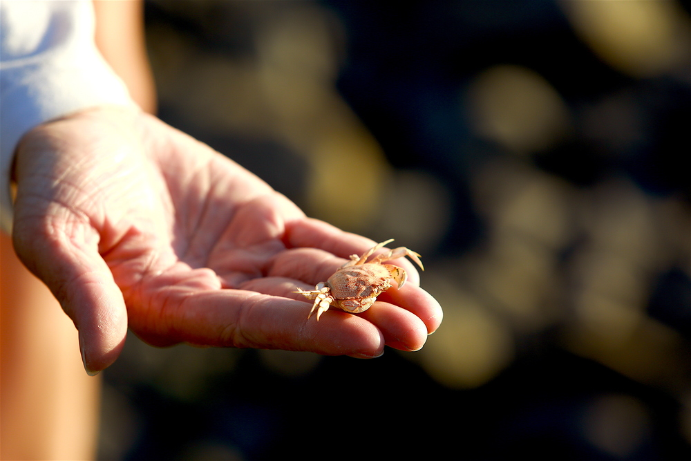 A small crab found along the water near Orca Adventure Lodge