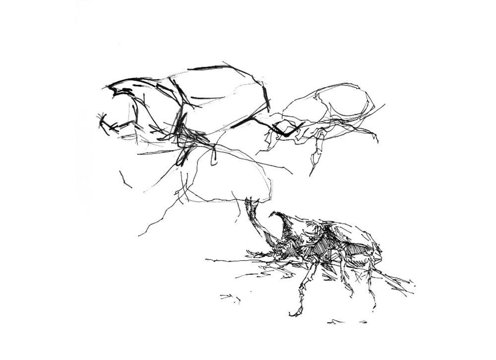 Beetle Study, 2010