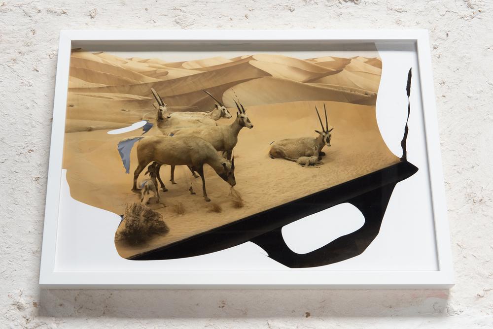 horned-african-goats.jpg