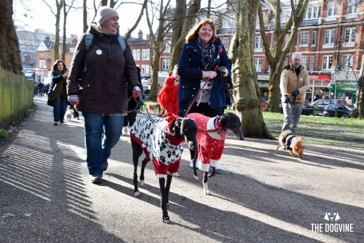 London-Dogs-Celebrate-Valentines-Day-On-The-All-Dogs-Matter-Valentines-Walk-London-Dog-Event-44-730x487.jpg
