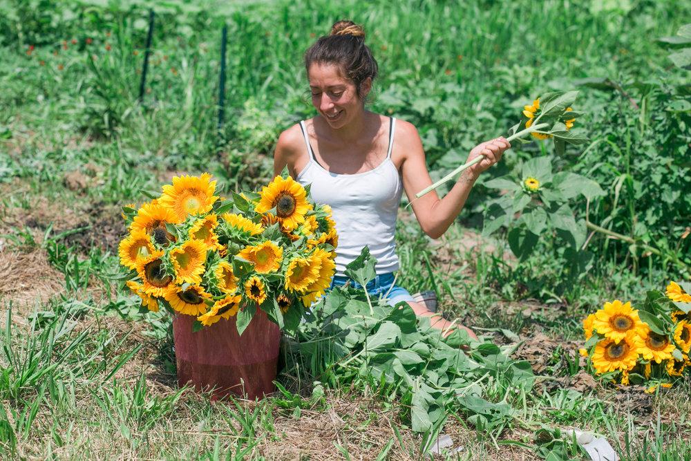 Kira and sunflowers.jpg