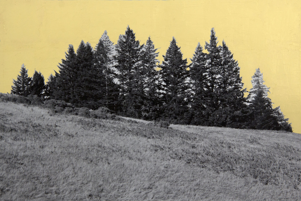 Stand, Northern California, 2013, digital pigment print with 22K gold leaf