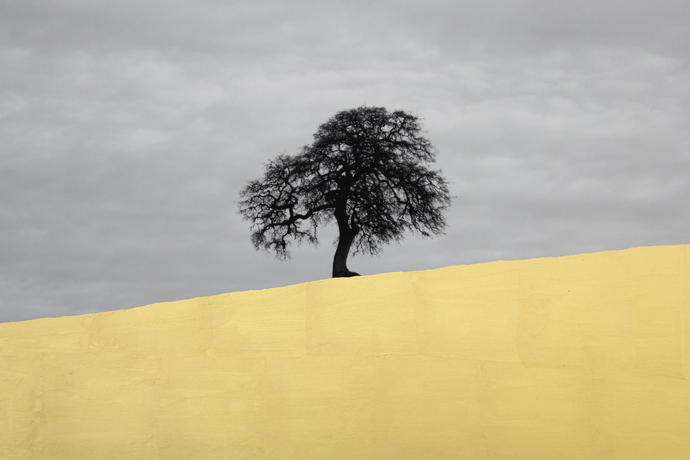 Lone Oak, Central California, 2013, digital pigment print with 22K gold leaf
