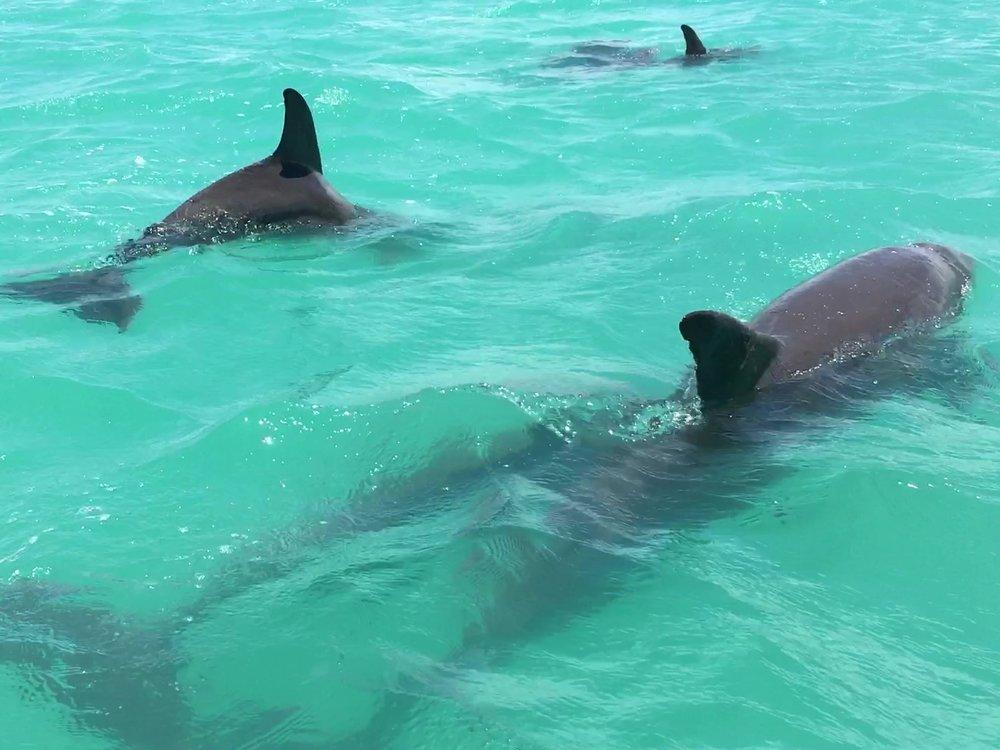 Bottlenose dolphin Mexico Tulum