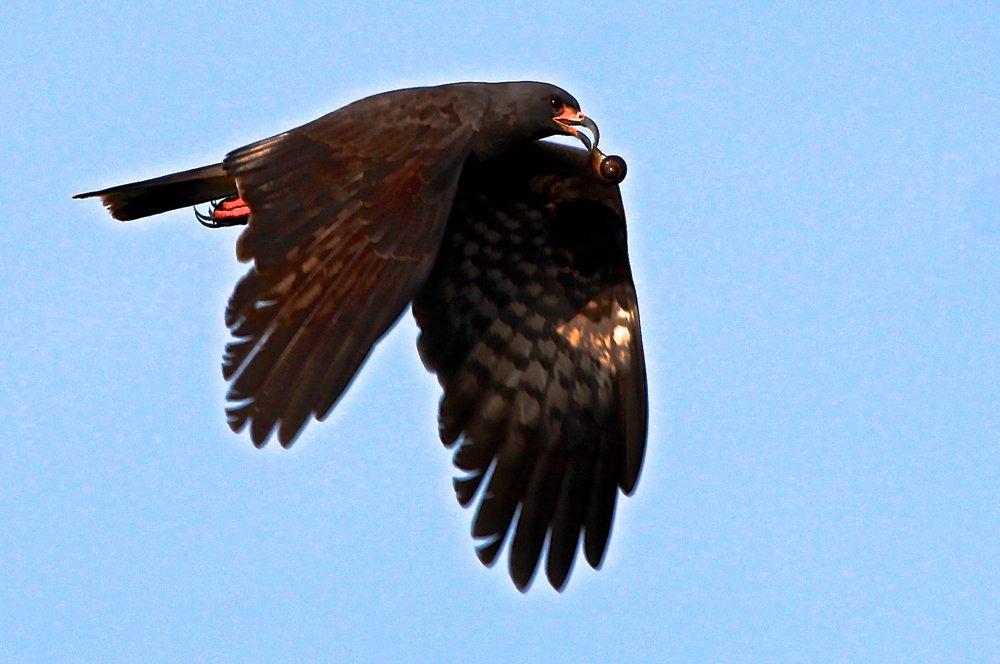 Birds of Quintana Roo