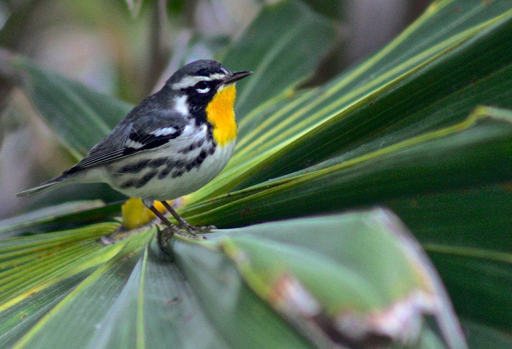 Bird Watching Tours Tulum