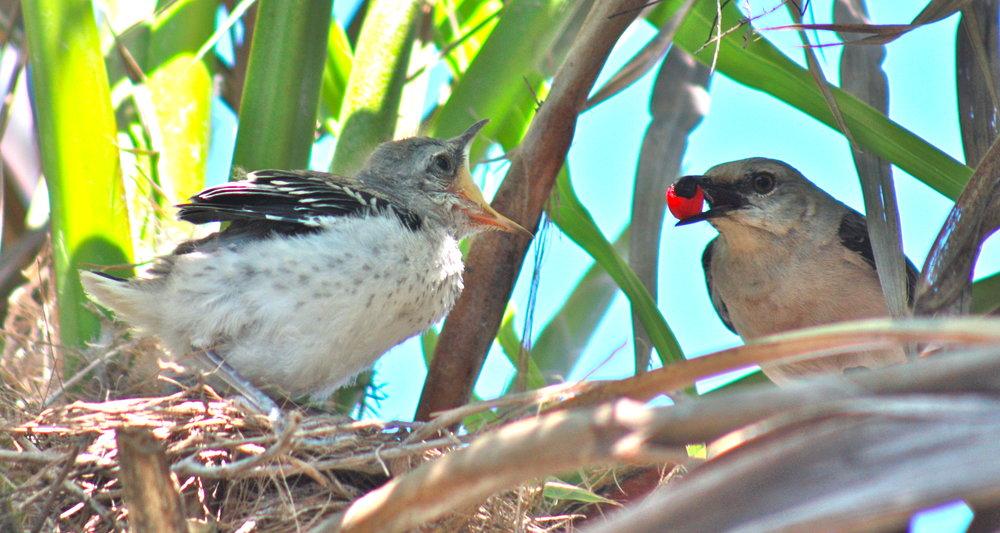 Mad mommy bird