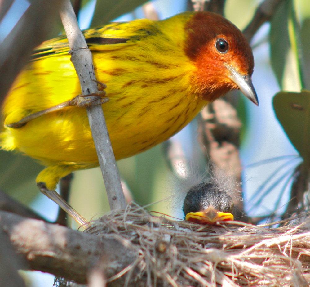 Momma Bird and Baby Bird