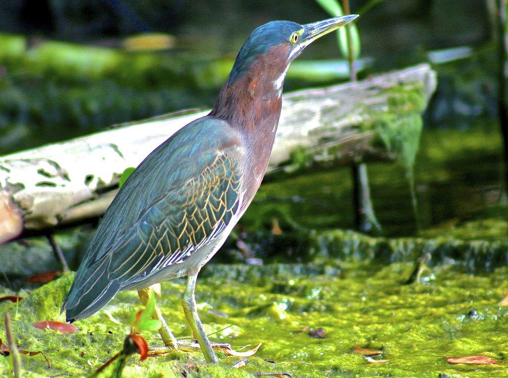 Beautiful Birds of Mexico