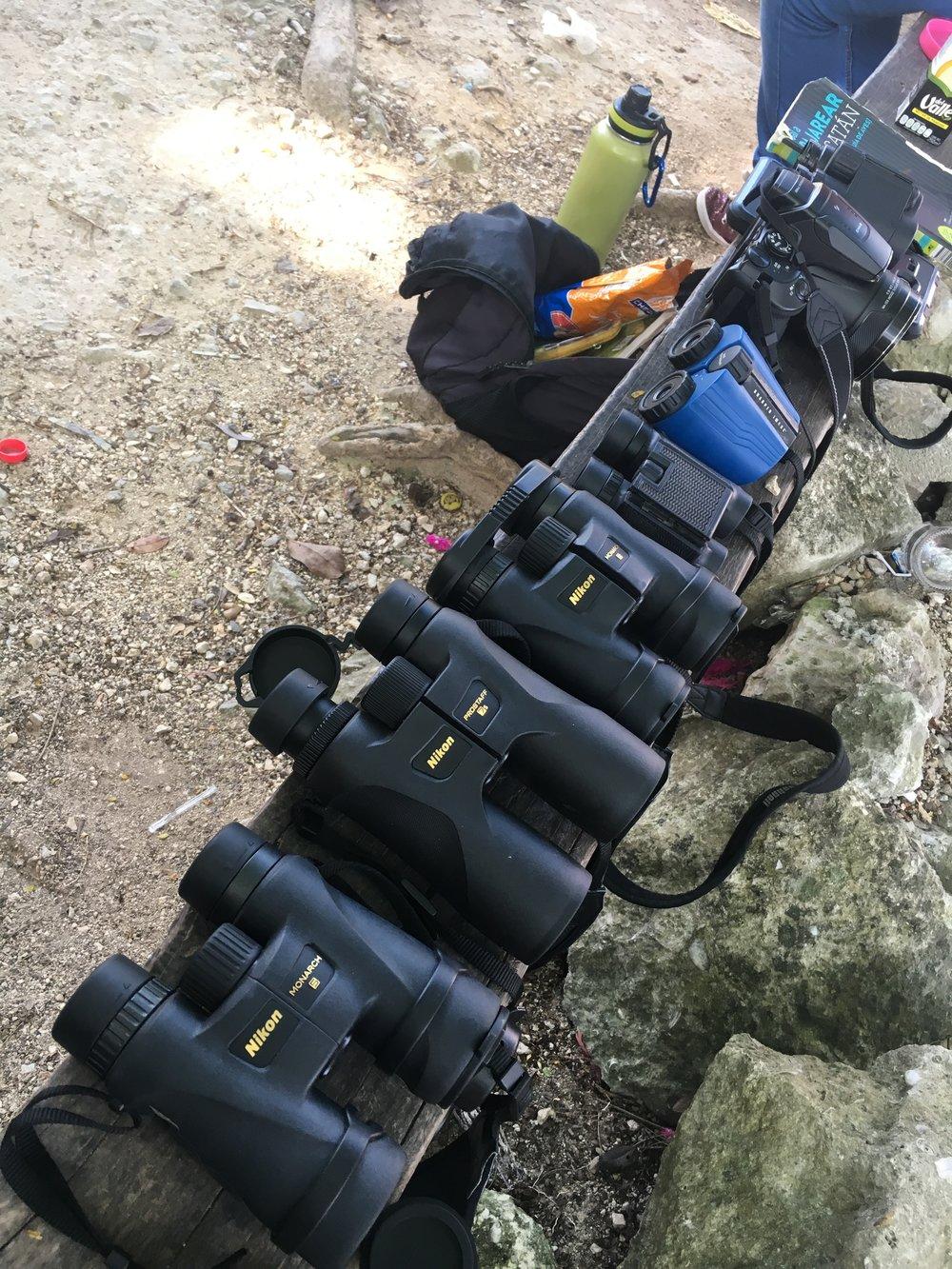 Nikon Binoculars Bird Watching Tours Tulum