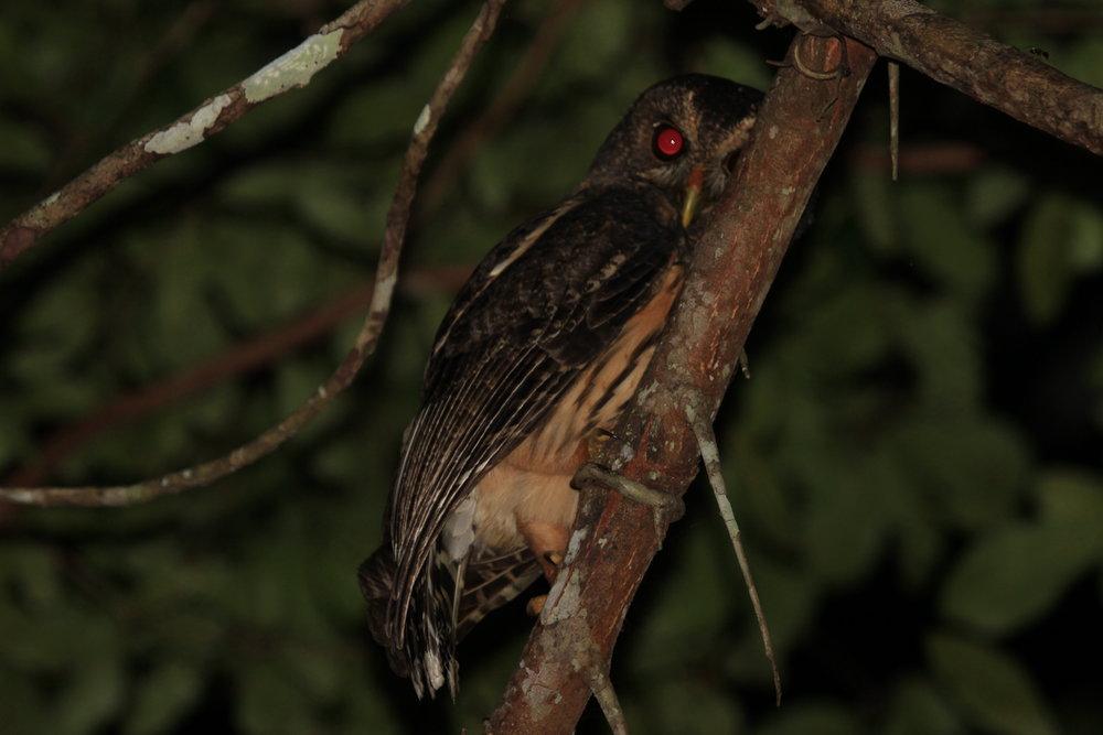 Night Bird Watching Tours