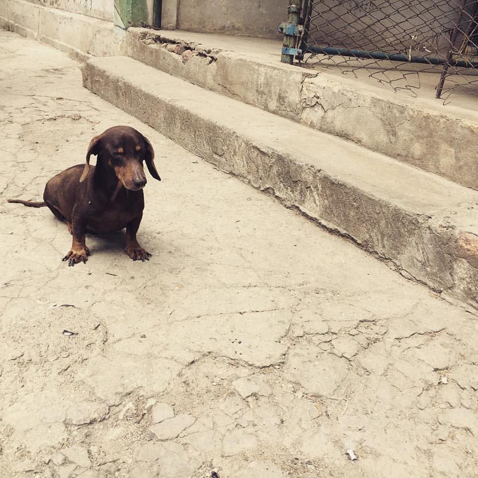 One of the many adorable (and, sadly, filthy) street dogs of Havana.