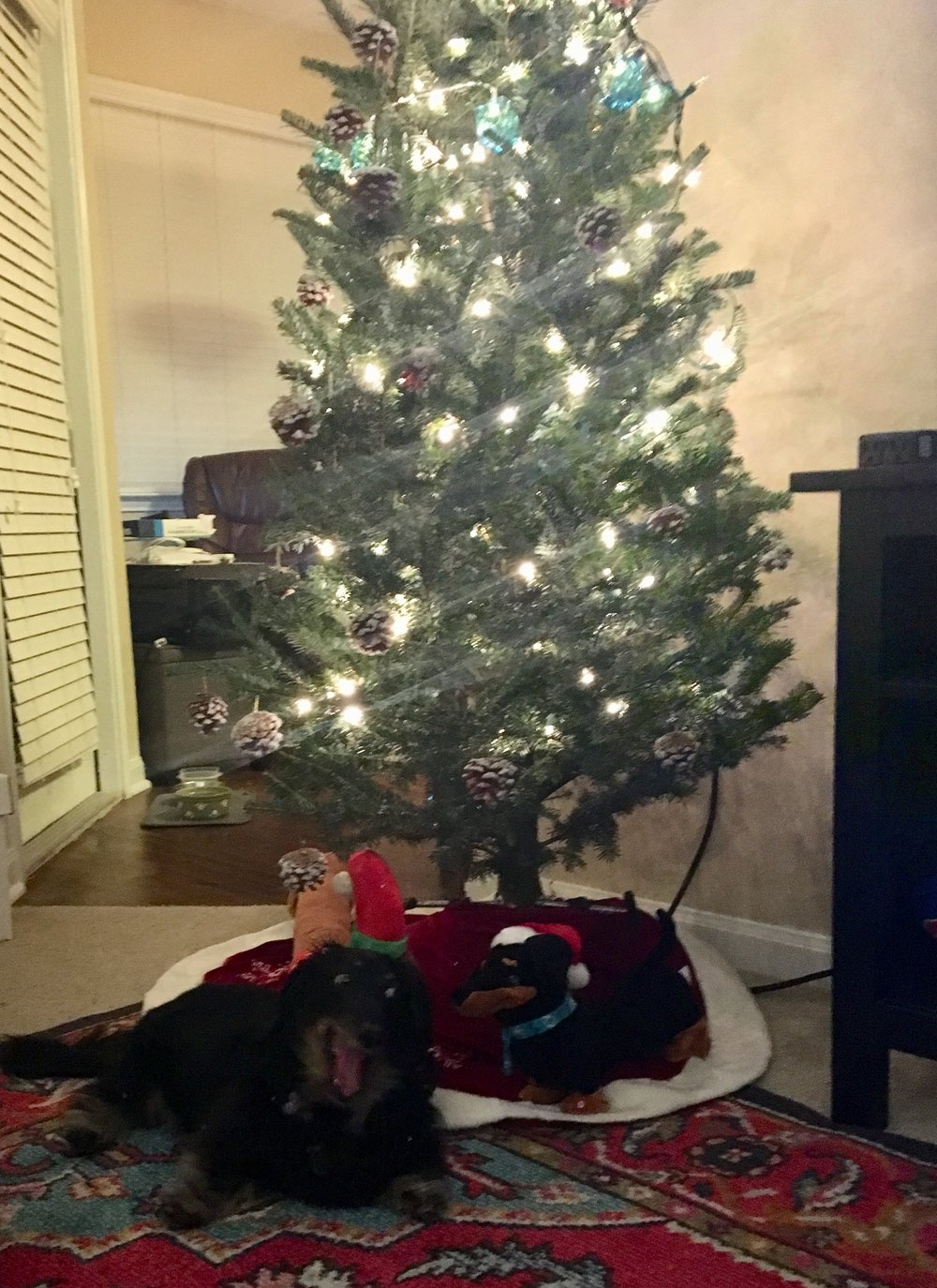 Toby is excited about his new Christmas tree.
