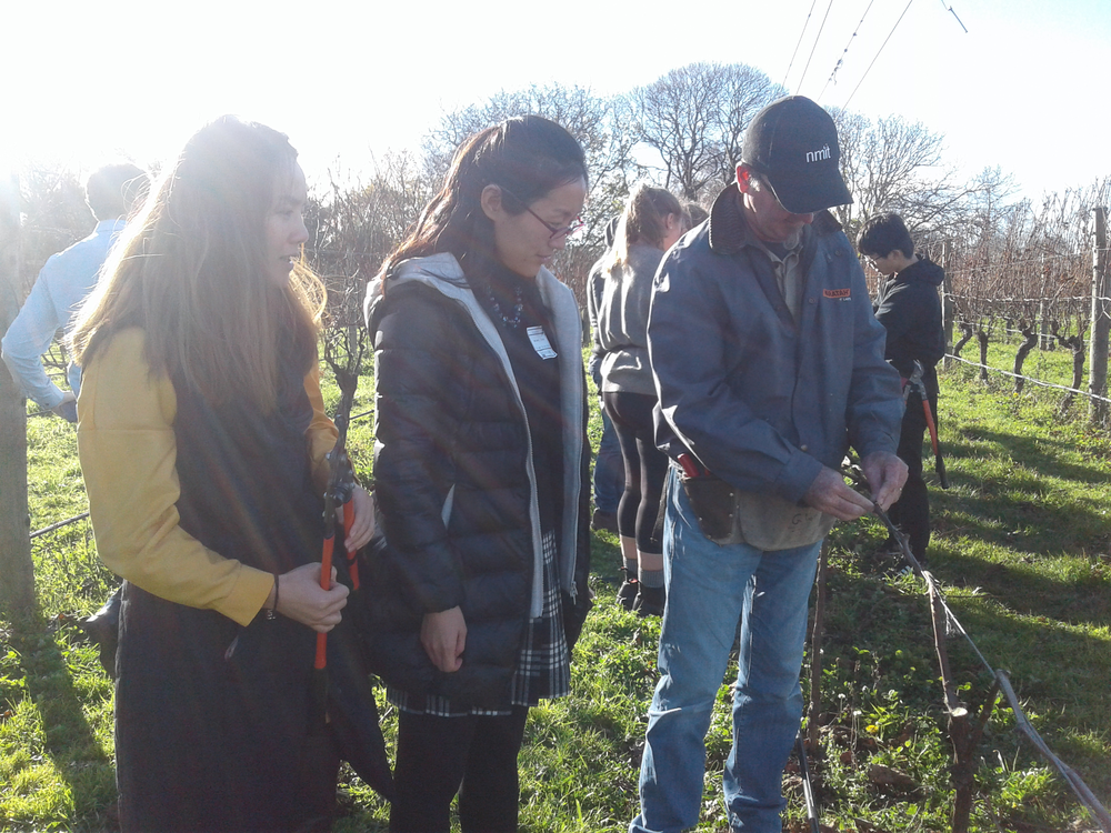 Getting hands on - lending a hand with pruning at NMIT's onsite vineyard.