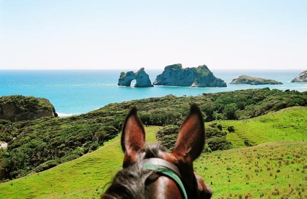 Horsetrekking Wharariki Beach.jpg
