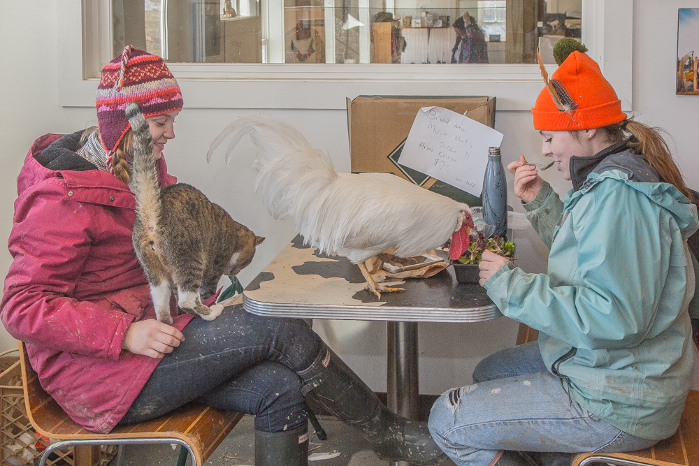 Clyde the Chicken enjoys lunch with some interns