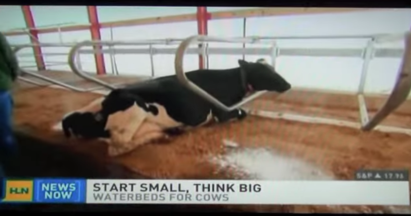LEPPLE DAIRY, WISCONSIN // CNN HEADLINE NEWS