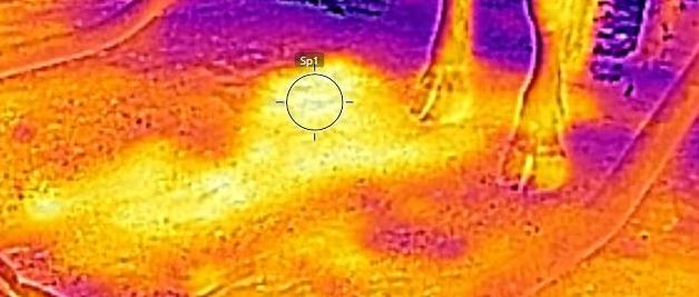 FLAT COW MATTRESSES Outdoor temperature: 89F Temperature of mat under cow: 97F