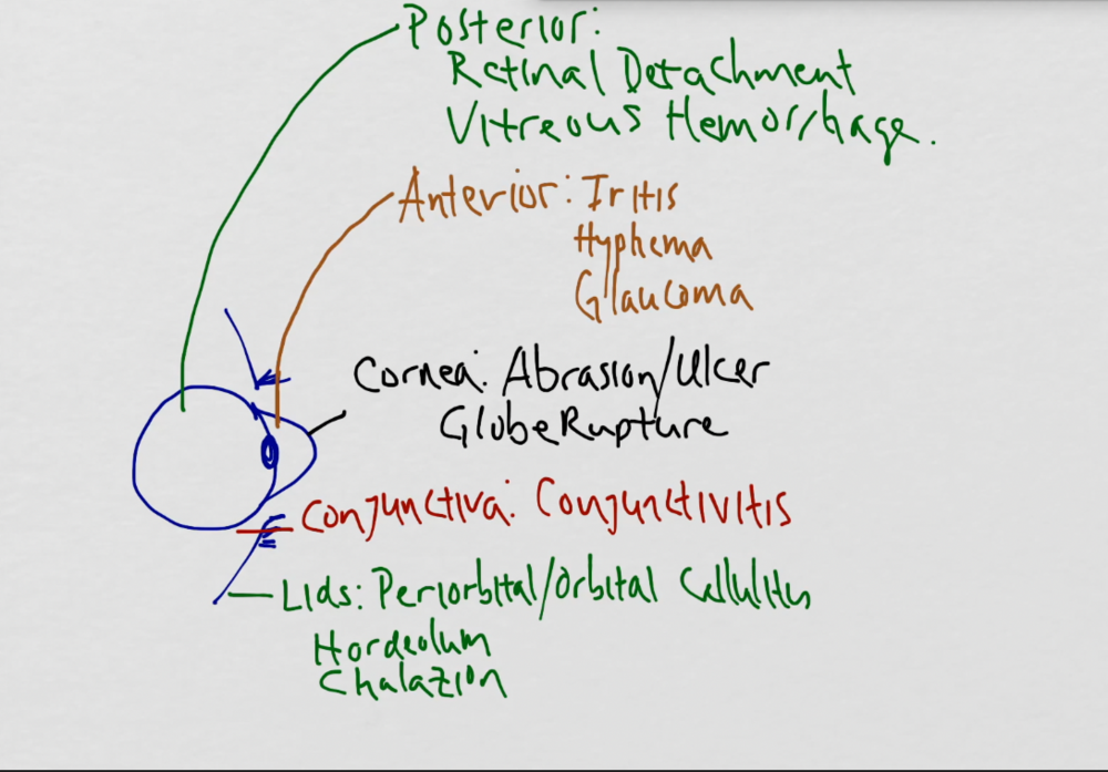Differential Diagnosis of the Eye