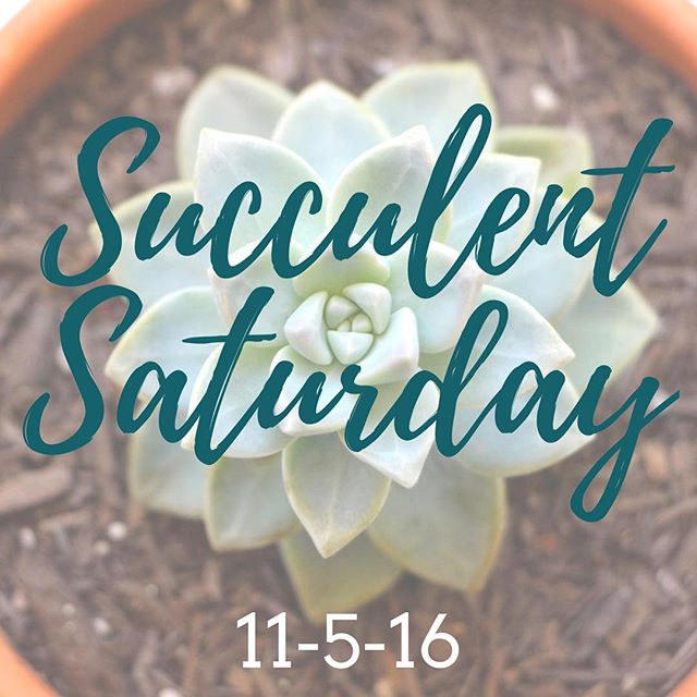 adjective |  suc•cu•lent  1. full of moisture  2. having fleshy and juicy tissues 3. rich in desirable qualities #organicskincare #getmelted #succulentlove #satx #artisticedgesalon