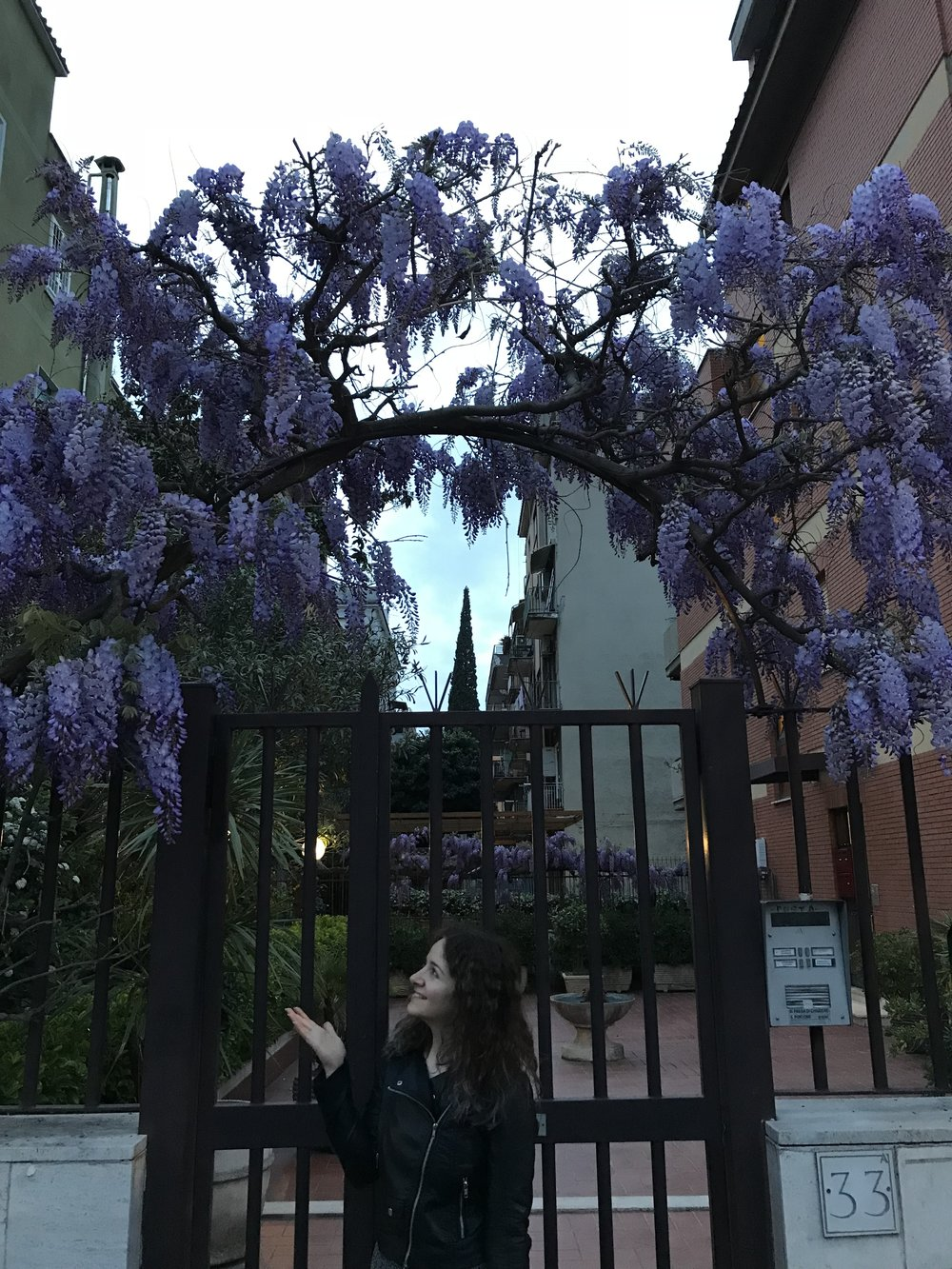 Wisteria flowers are in bloom here for a week! So magical.