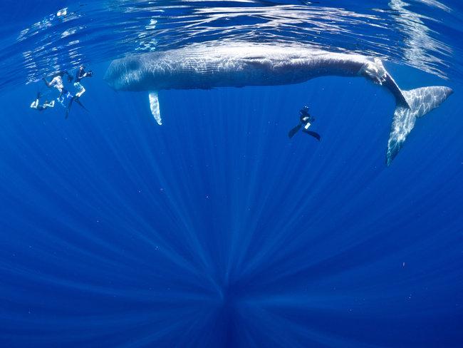Saving Sri Lanka's blue whales