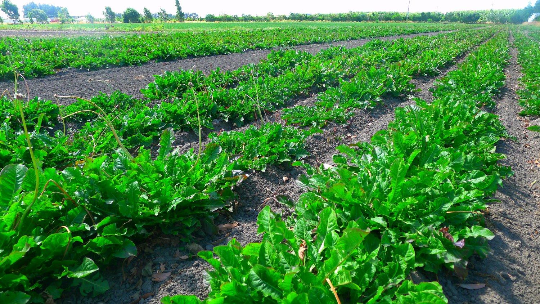 Organic Input Products — BioGro NZ | Organic Certification