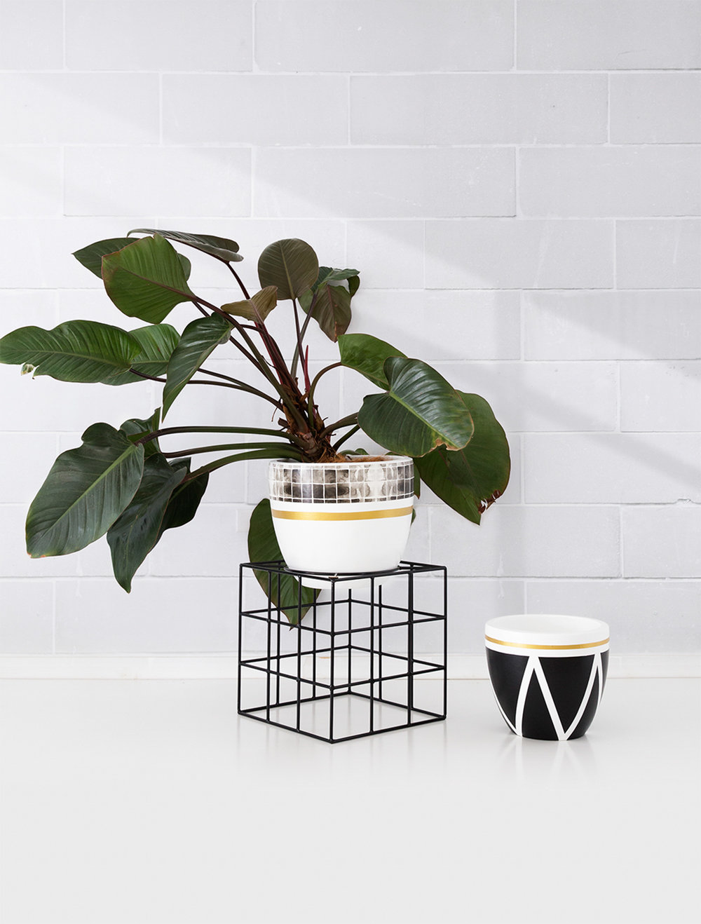 Grid Wallpaper pot with The Hulk Plant stand and Pancho pot on floor 23 LR.jpg