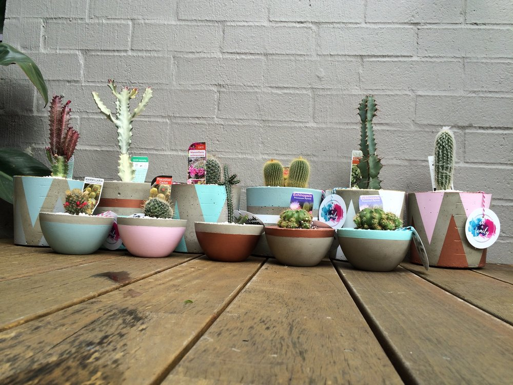Concrete pots in pastels.jpg