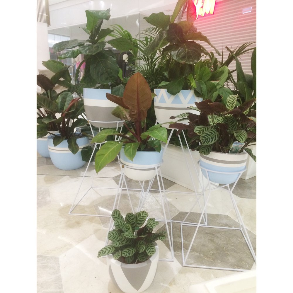 Pots, Plants and Plant Stands on Hire for WhiteWhiteWeddings event at Garden City Shopping centre .jpg