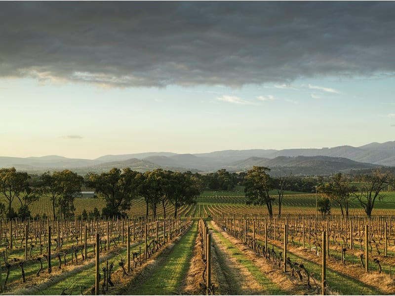 Vines and Vistas of Yarra Yering