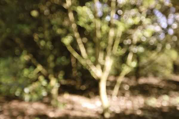 blur 1.JPG
