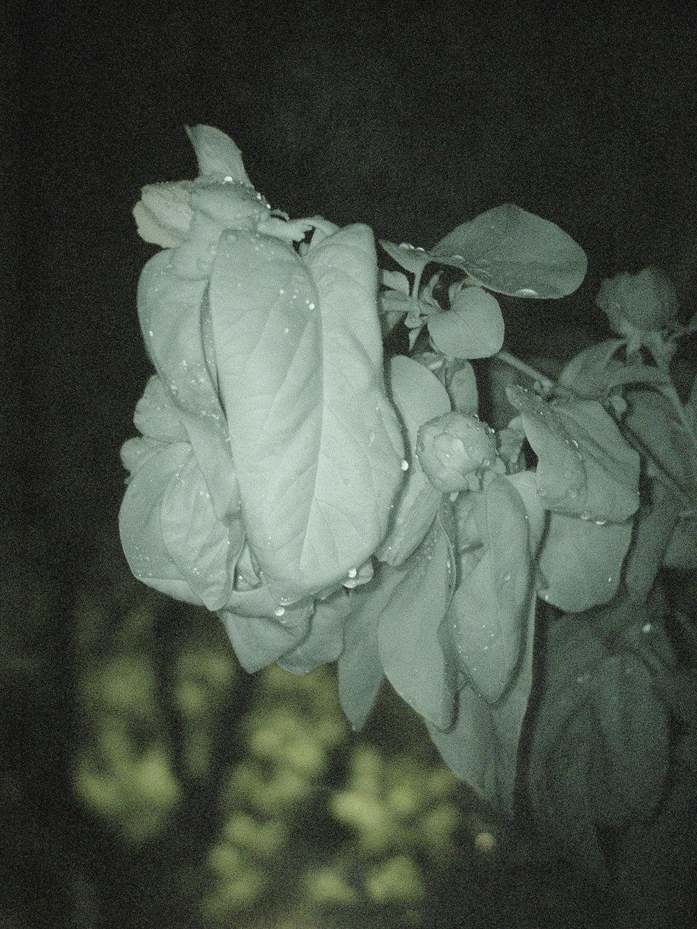 widmertheodoridis_Simone Kappeler_Der Garten nachts XX, 25.4.2014, 42,5x32cm.jpg