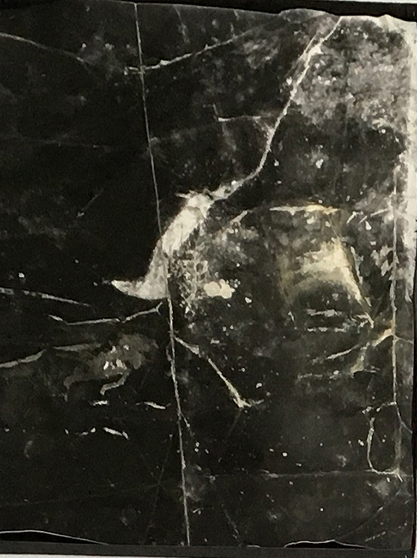 Galerie Dix9_Paula de Solminihac_black_bark1- print of natural item on inkjet print-2016 Kopie.jpg