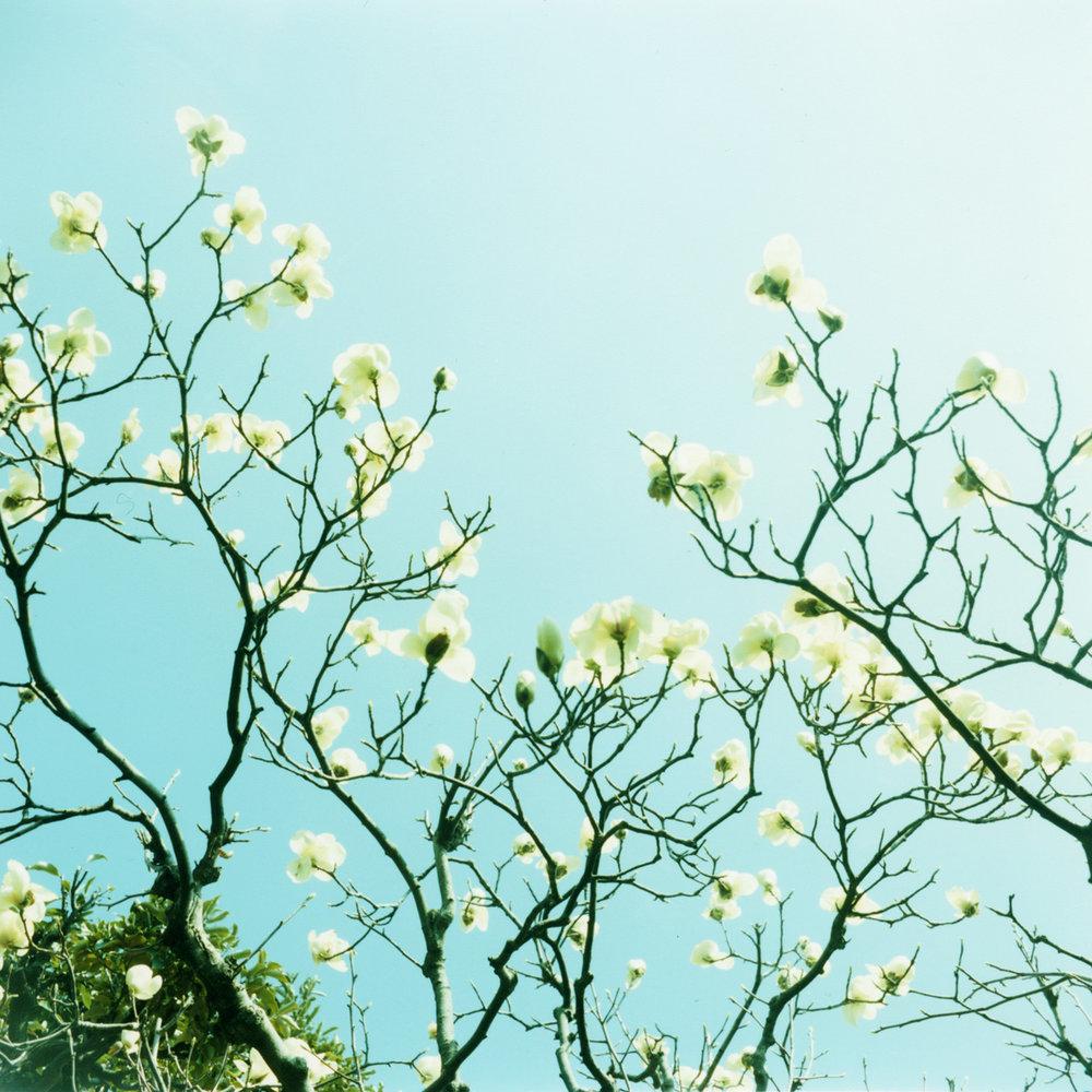 Mikiko Hara - TheseAreDays 062.jpg