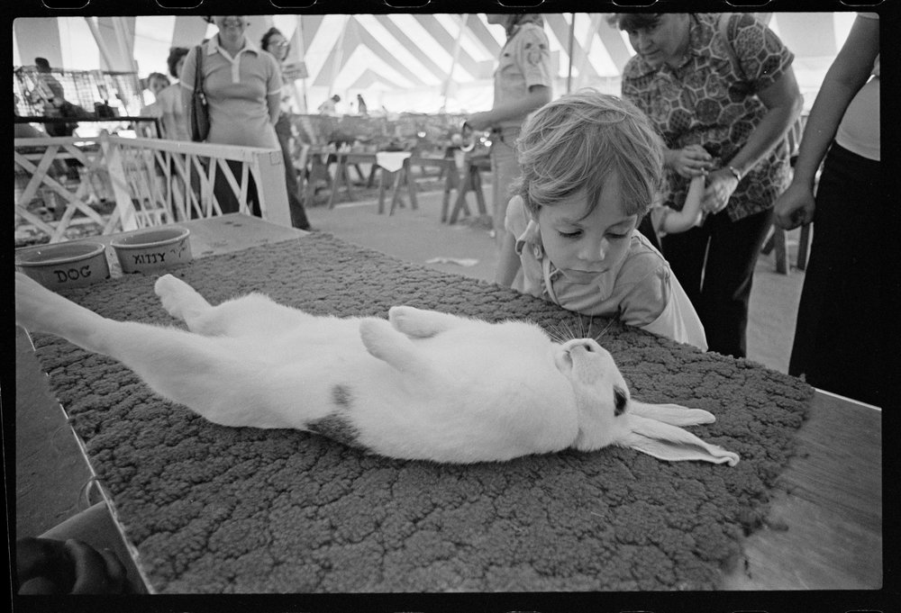 Rabbit Asleep 032478 F35.jpg