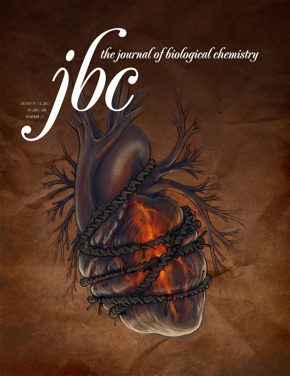Doxirubicin Cardiotoxicity