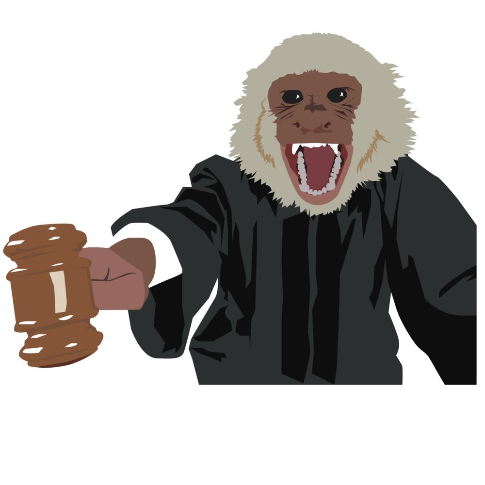 Image result for monkey judge