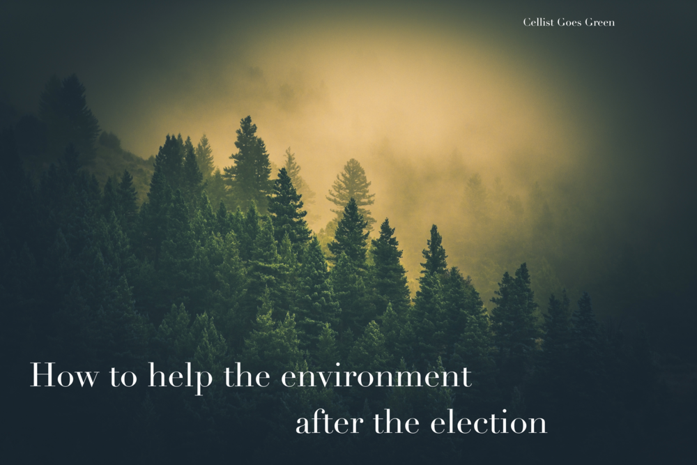 How to help the environment after the election | Cellist Goes Green