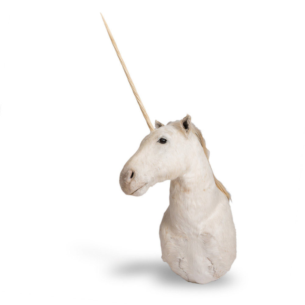 RARE LATE 20th CENTURY UNICORN TAXIDERMY